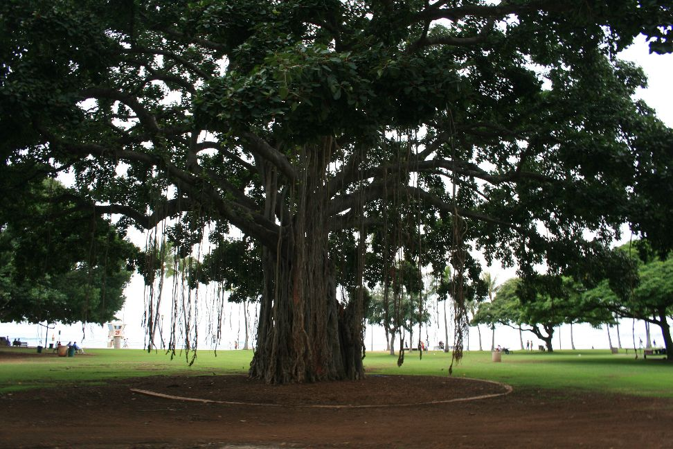 Lianenbaum