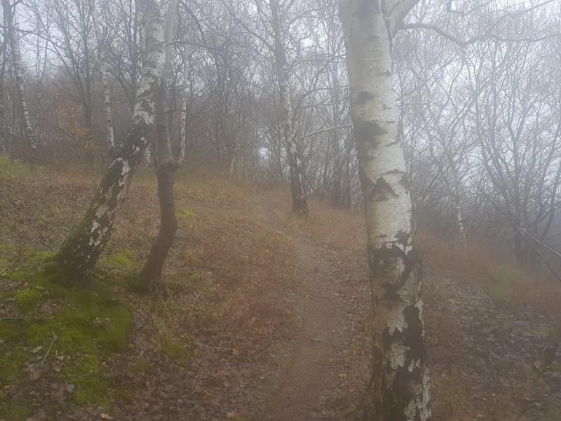 Nebliger Trail