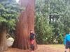 Markus und der Baum